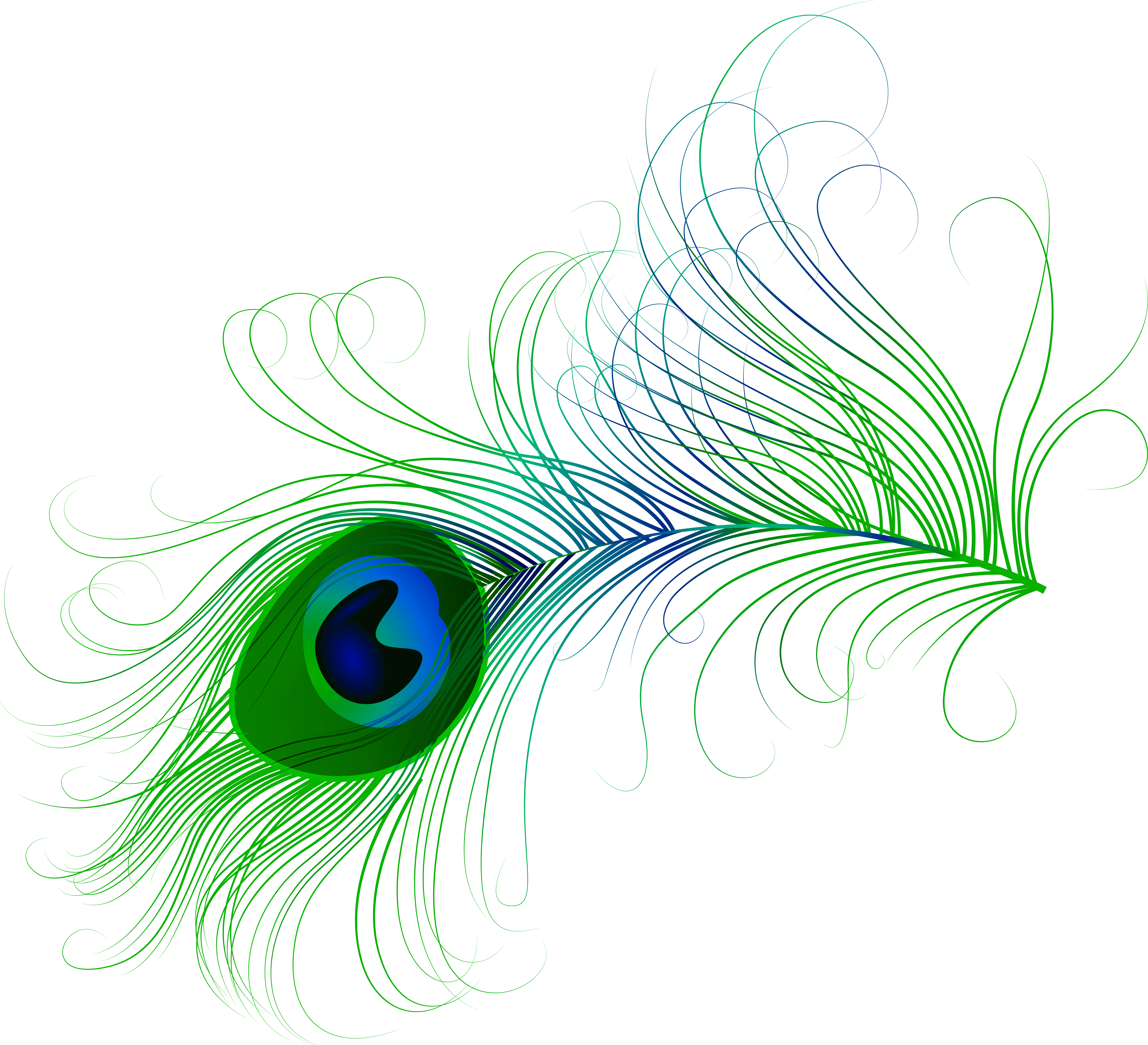 Tribal feathers png. Peacock feather clip art