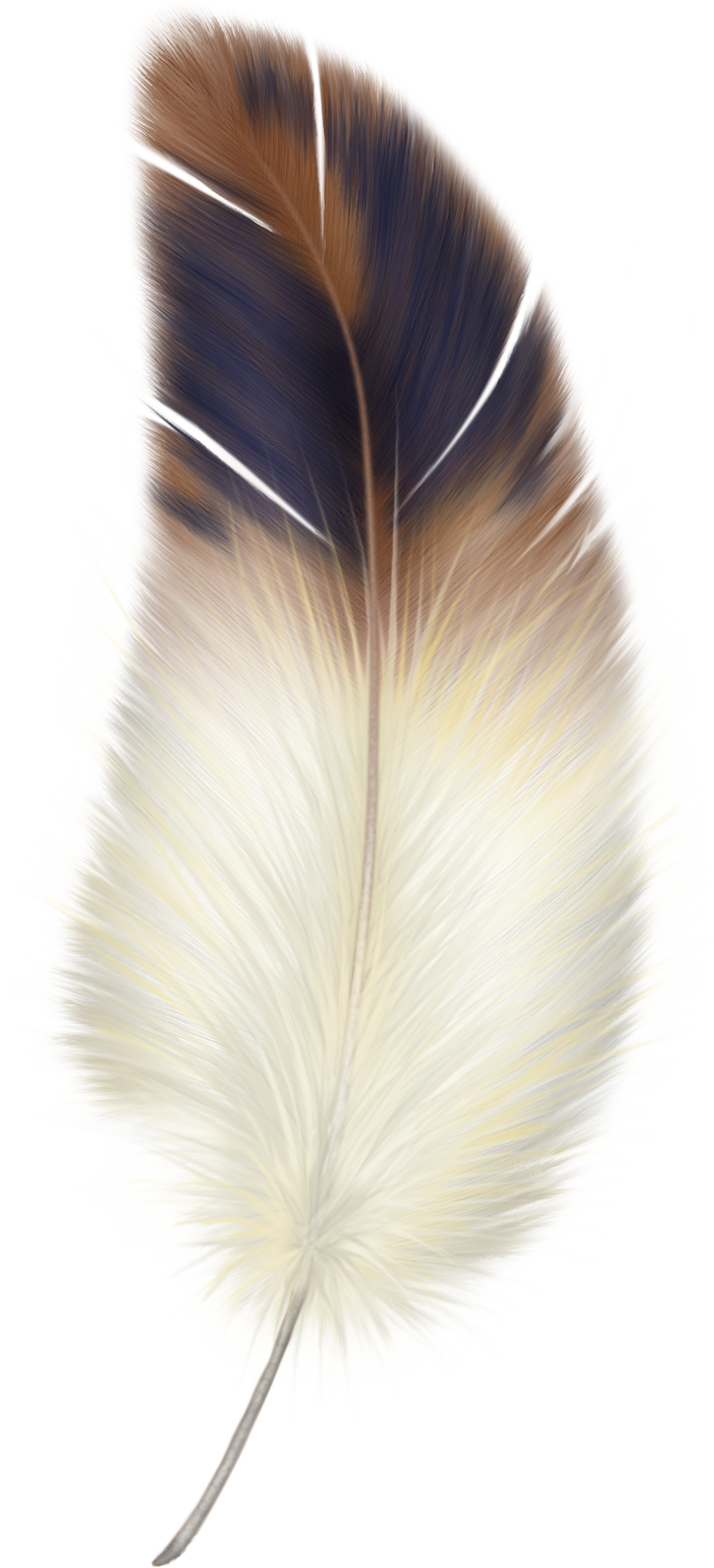 Coral feathers png. Animals free images feather