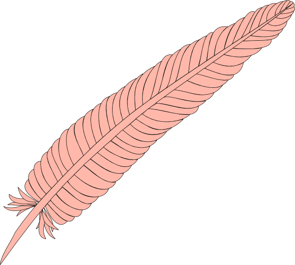 Coral feathers png. Feather clip art at