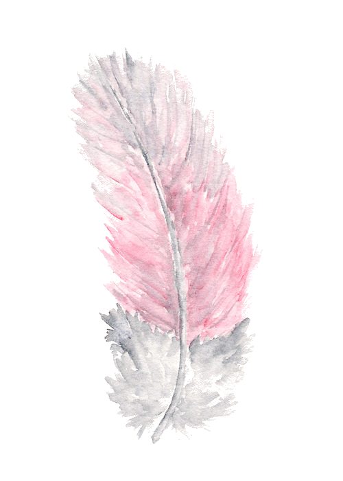 watercolor feathers png