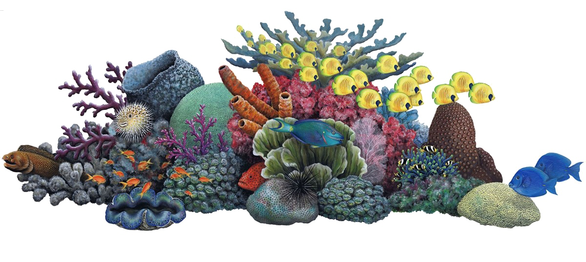 Coral png. Image background arts