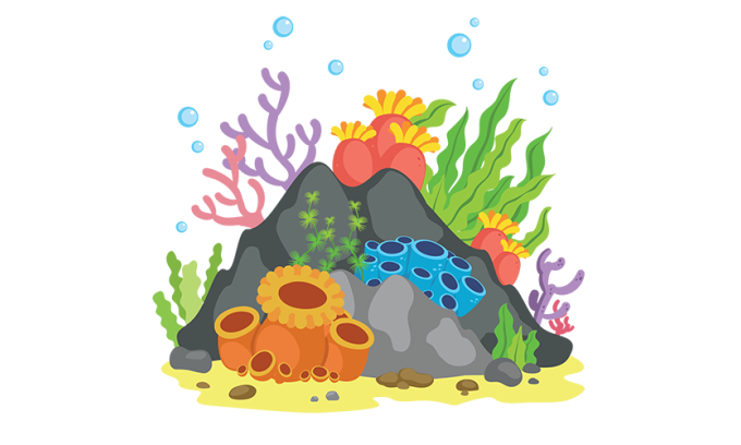 boulder drawing coral reef