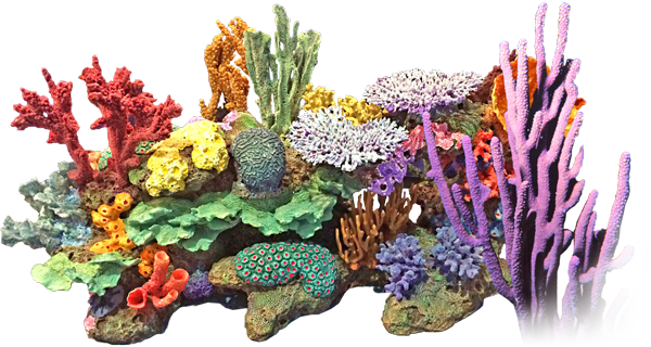 Coral reef png. Background image arts