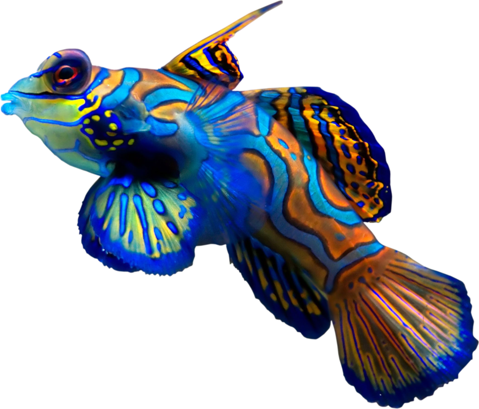Coral reef png. Fish by hrtddy on