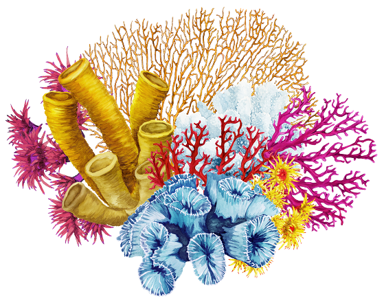 Coral reef png. Tat tropical illusion previous