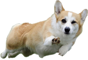 Png clipart images gallery. Transparent corgi royalty free