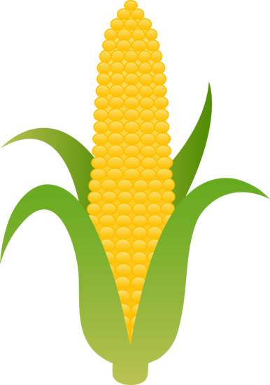 Corn cartoon png. Large husk of golden