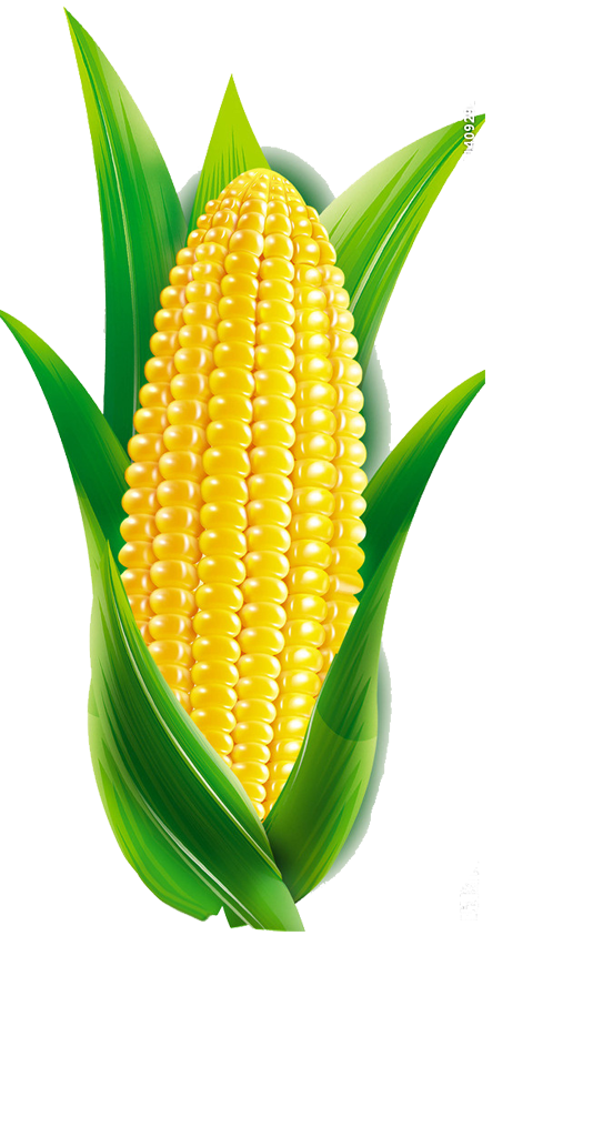 Corn cartoon png. Maize transprent free download