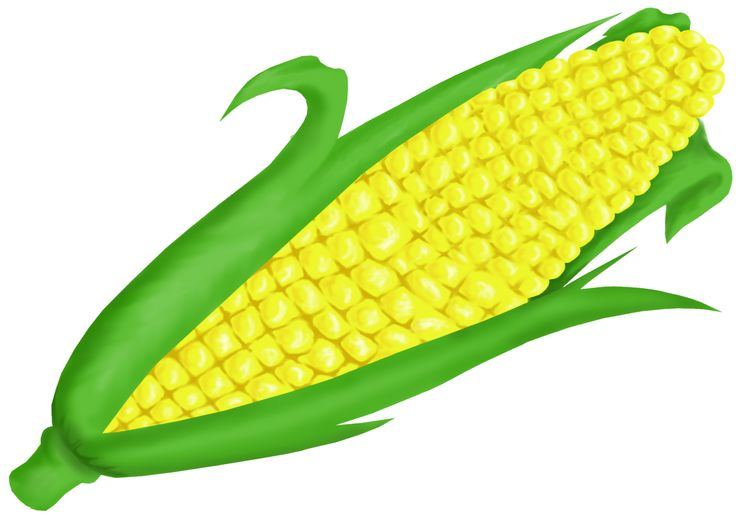 Corn clipart. Ear of at getdrawings