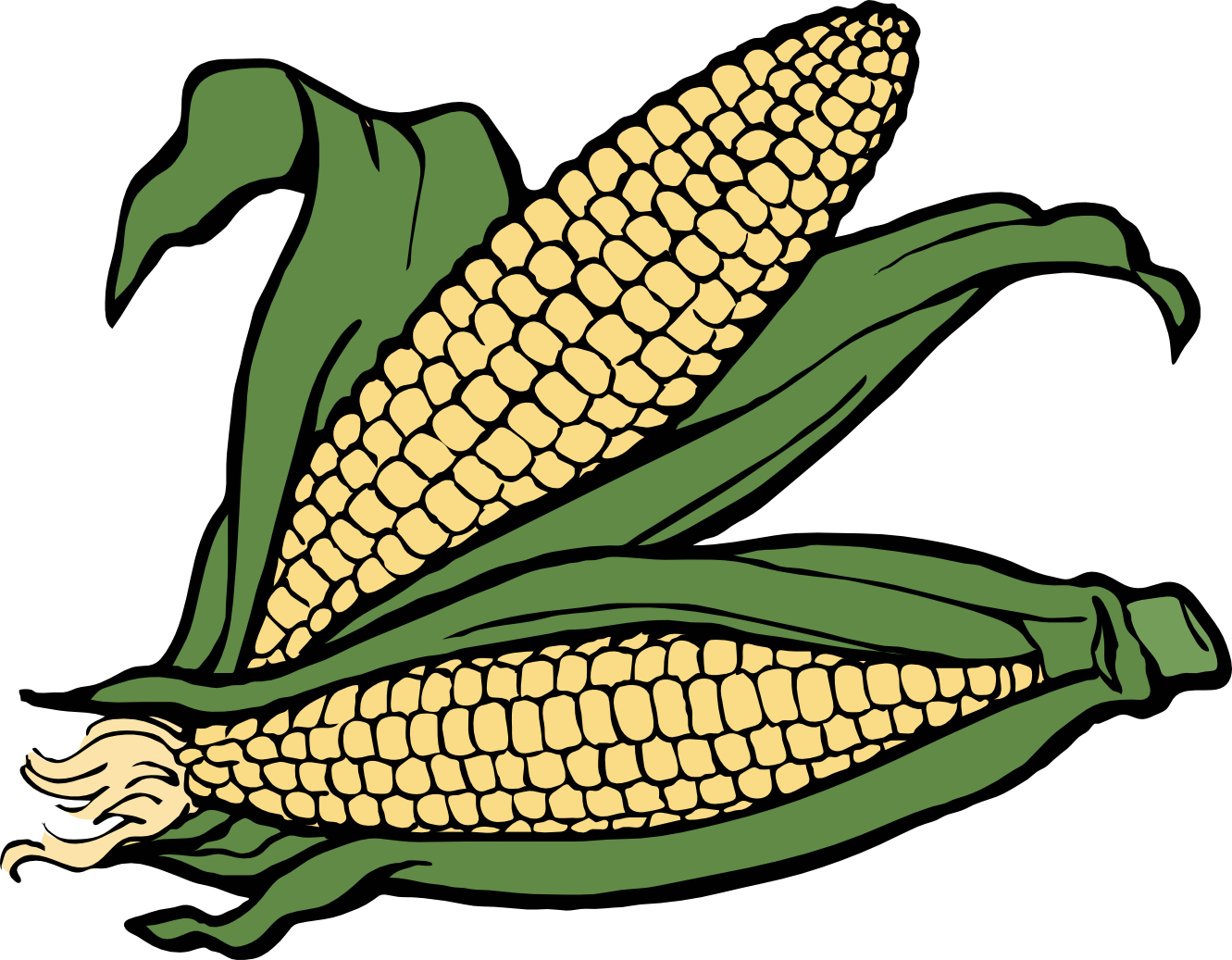 Crops clipart maize crop. Free indian corn download