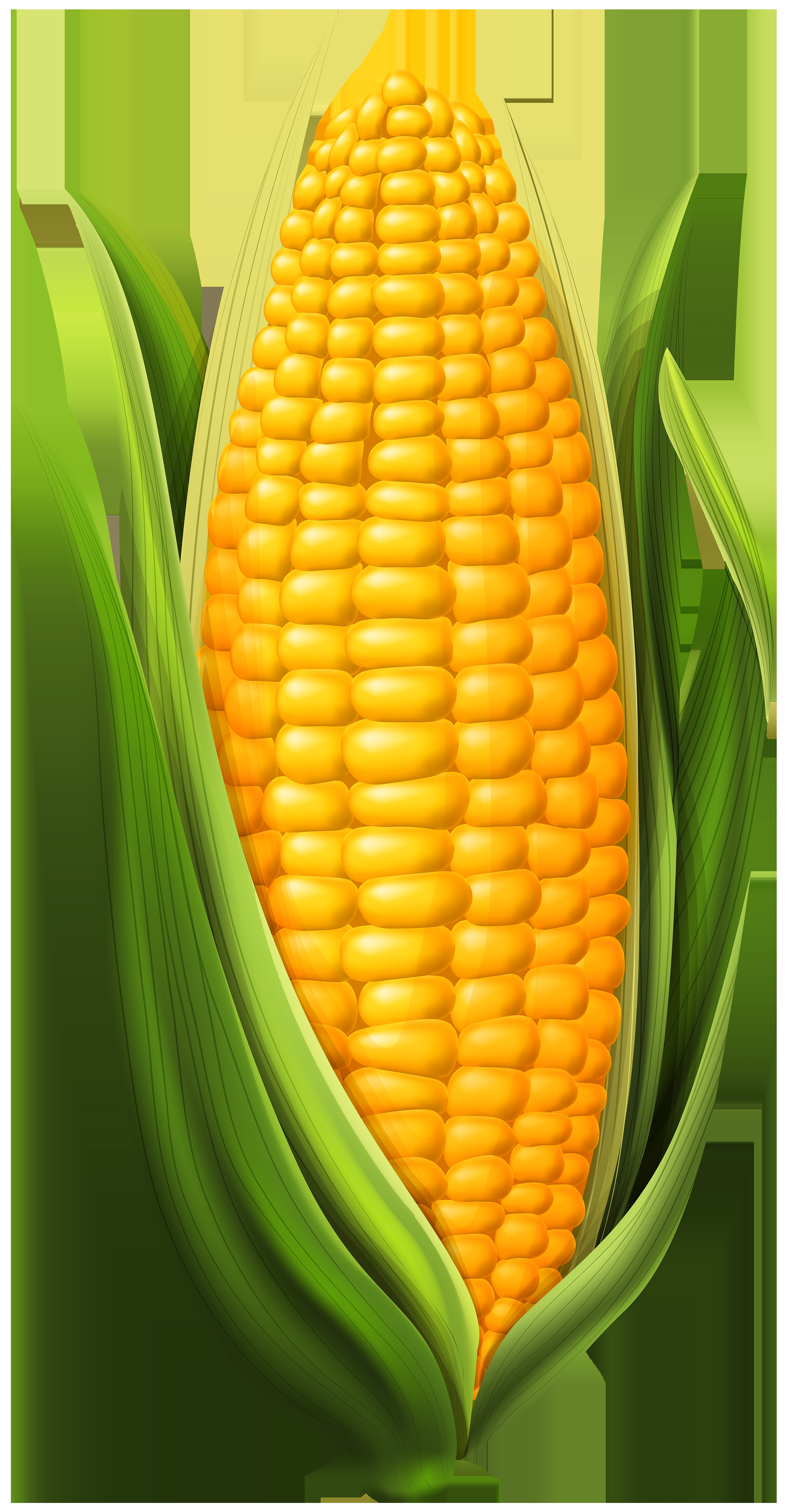 Corn clipart clip art. Awesome gallery digital collection