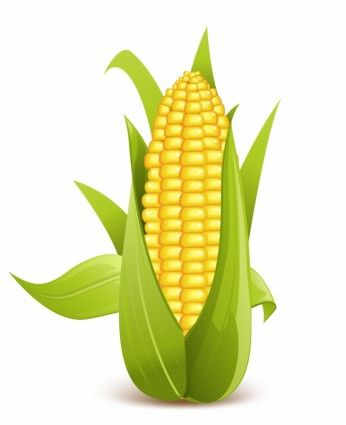 Corn clipart cob. Awesome on the sweet
