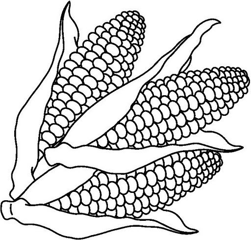 Corn clipart cob. Black and white best