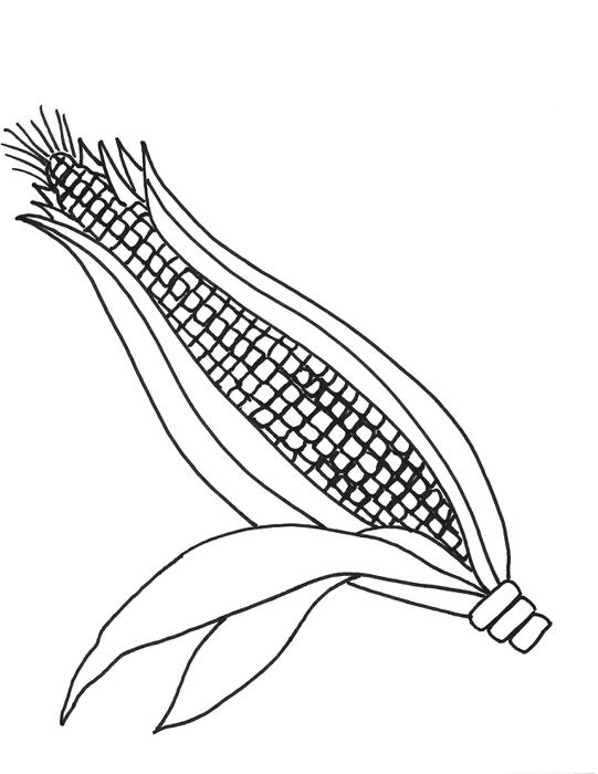 Corn clipart easy draw. Drawing image at getdrawings