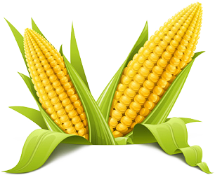 Corn png transparent. Picture clip art library
