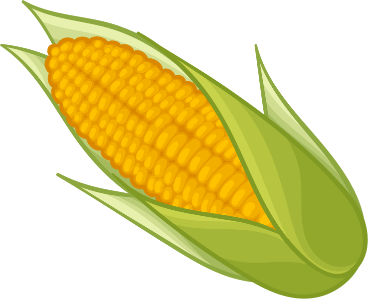Corn clipart png. Collection of high