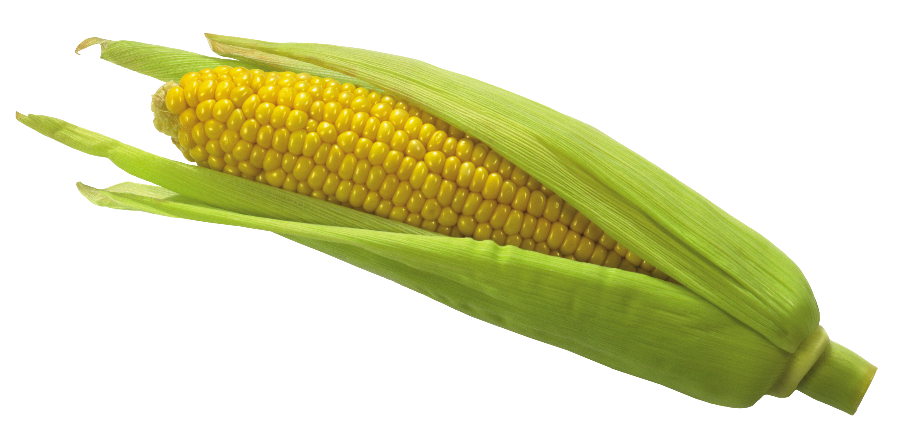 Corn png cute. Picture gallery yopriceville high