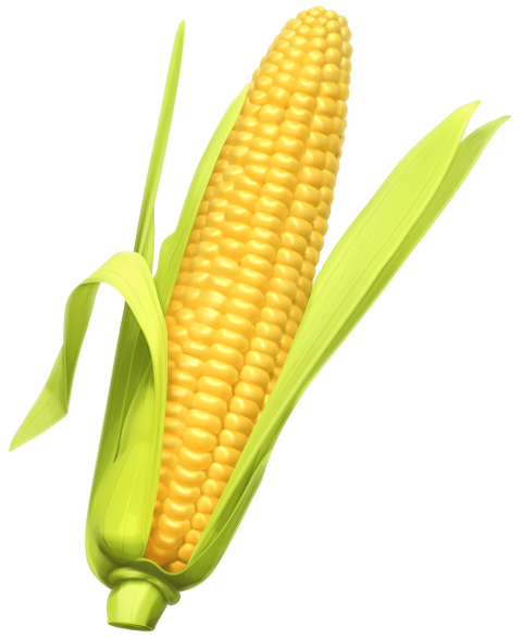 Corn cob png. Free images toppng transparent