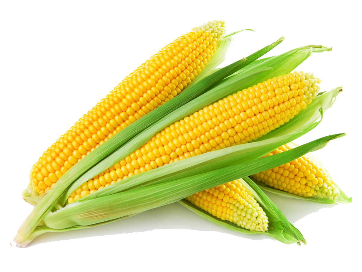 Corn cob png. Images transparent free download