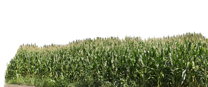 Corn field png. Welcome to be co