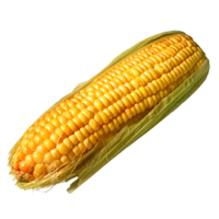Corn on the cob png. Transparent background