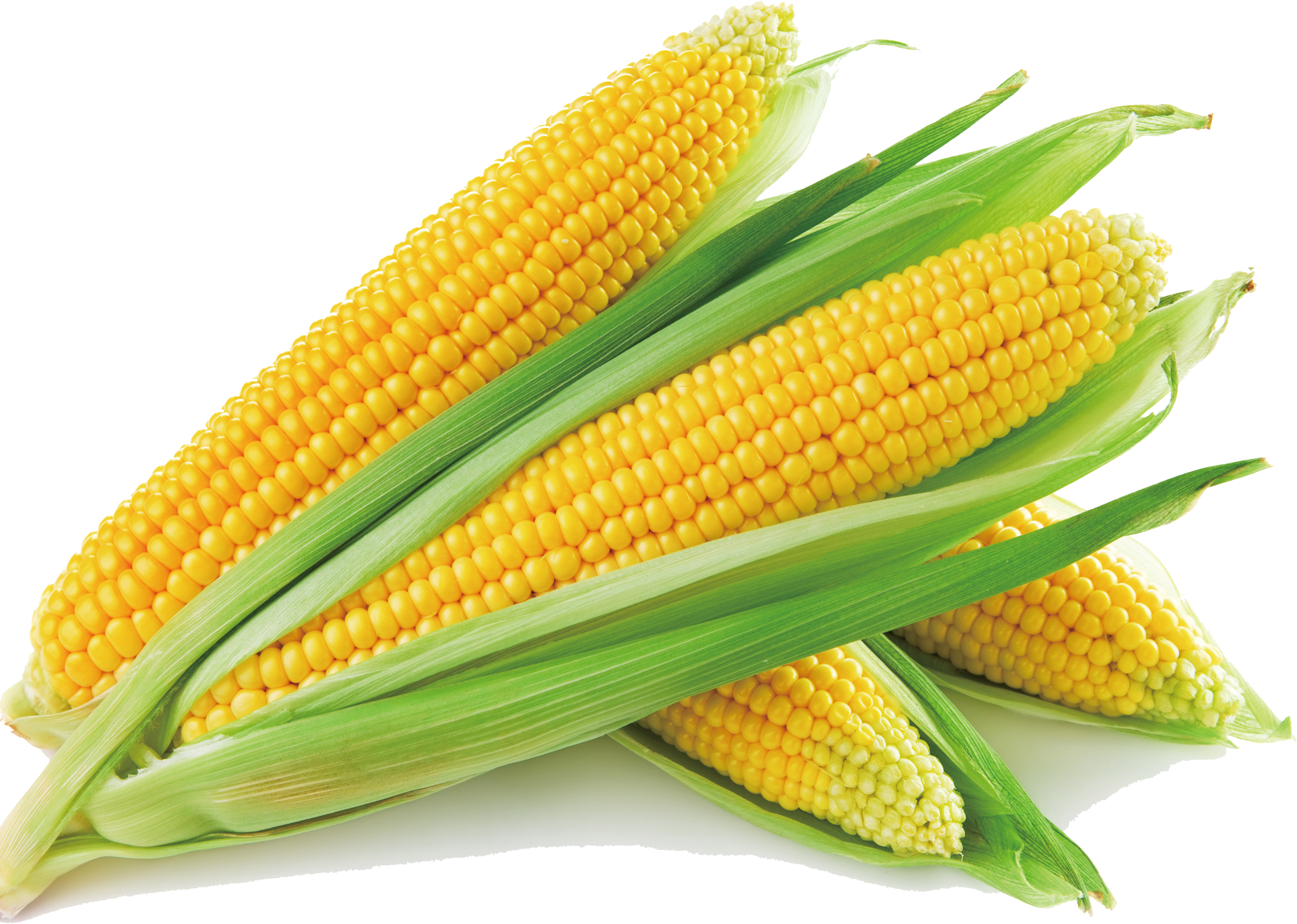 Corn on the cob png. Sweet soup maize vegetable