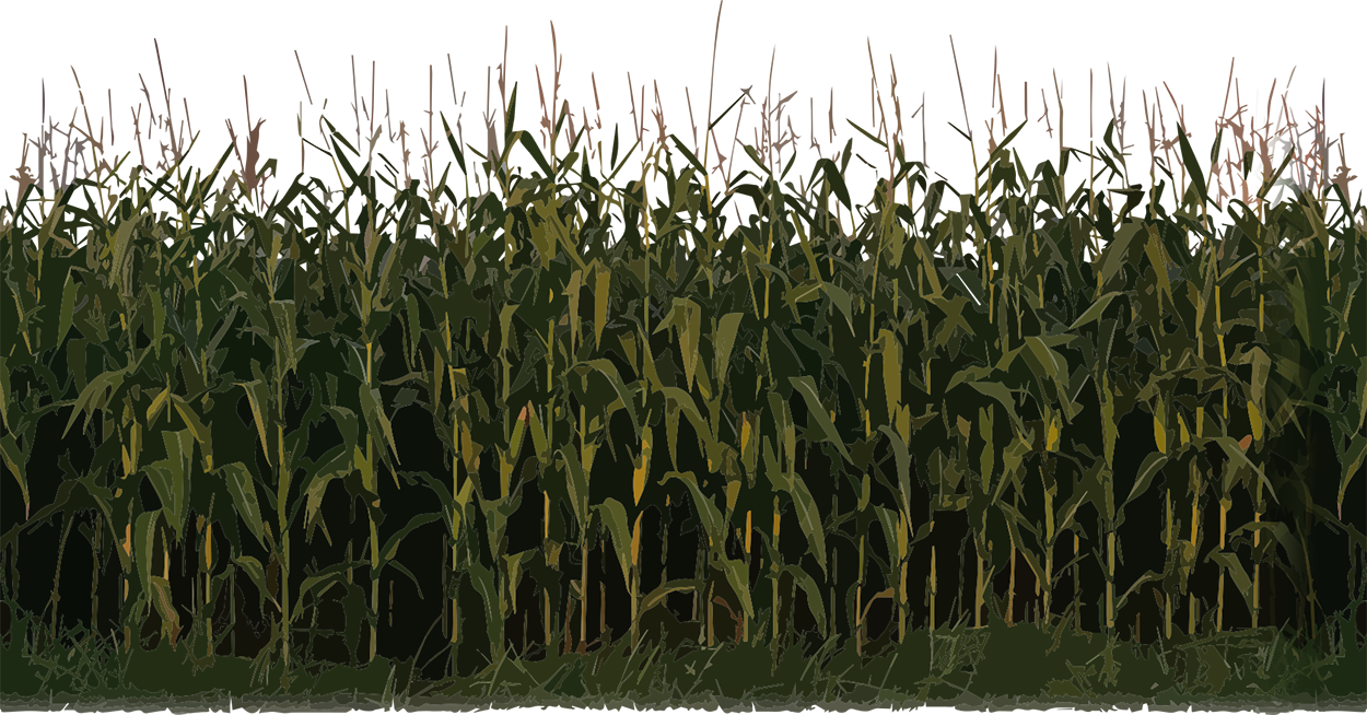 corn field png
