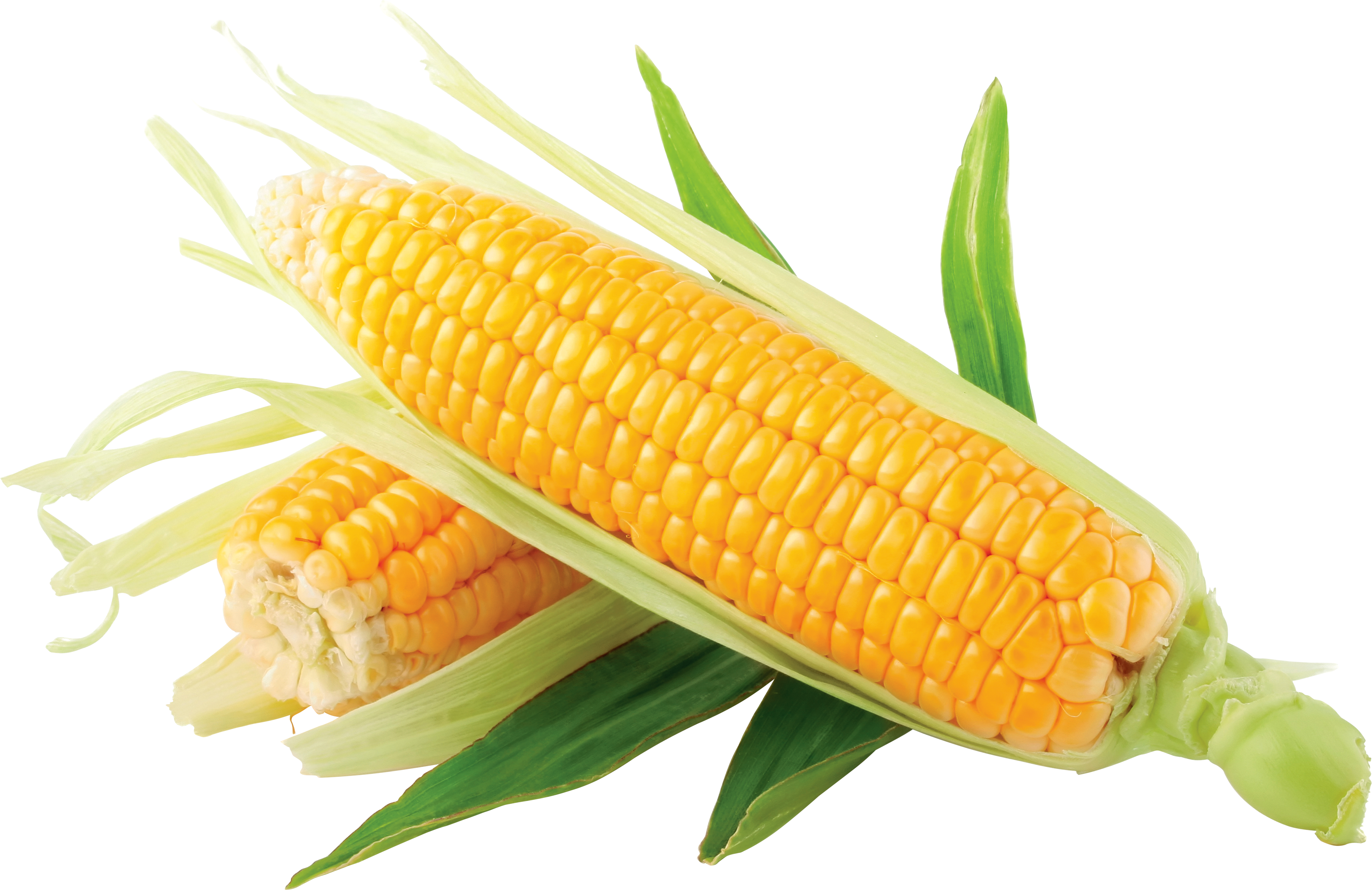 Corn png. Images download yellow image