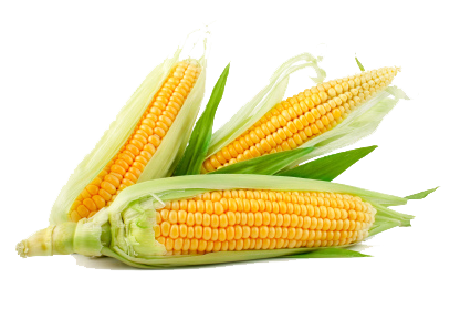 Corn png transparent. All