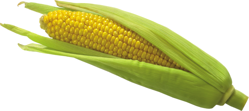 Corn png transparent. Download free image with