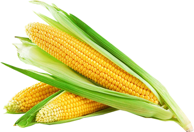 Corn png transparent background. Download free image with