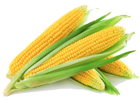 Corn png. Maize transparent images all