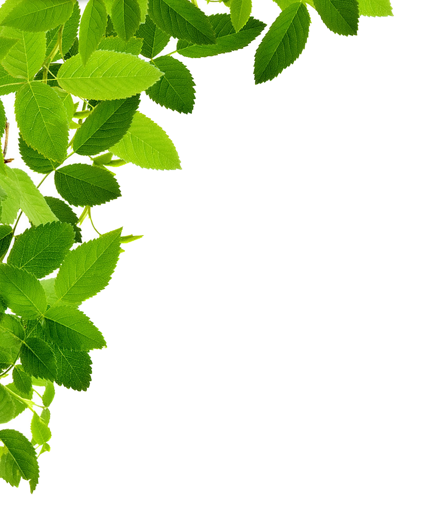 Corner transparent green. Free download leaves left