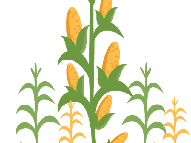 Stalk image free. Cornfield drawing wheat field graphic