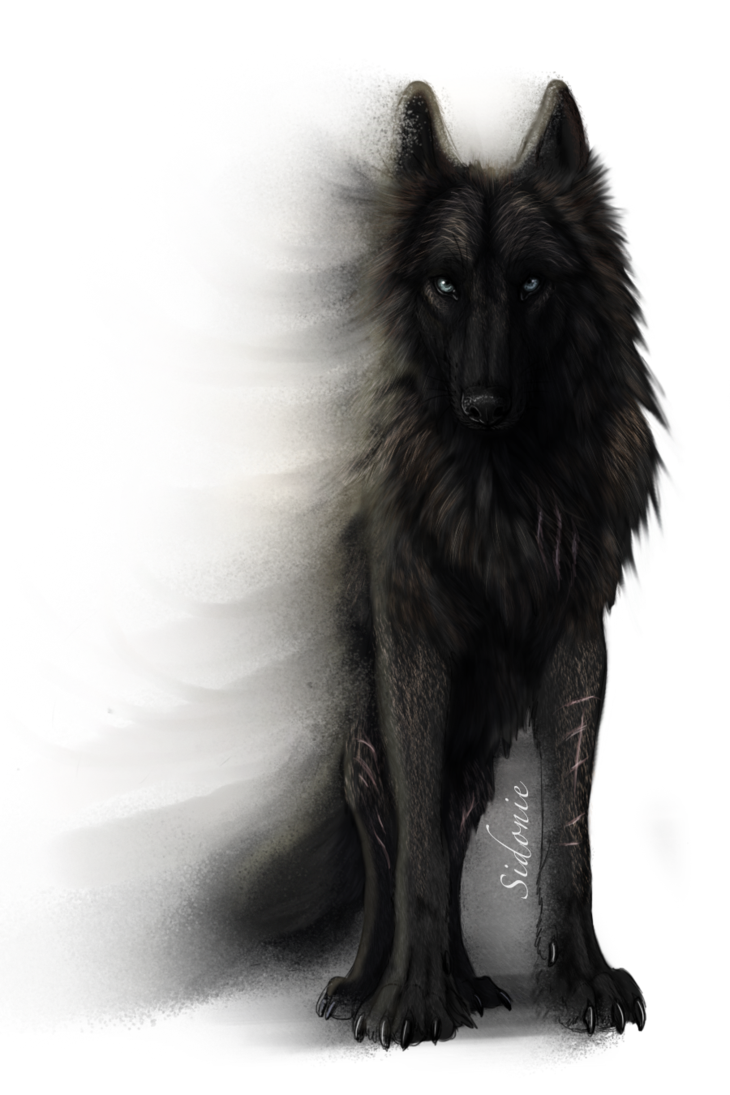 Nuclear drawing wolf leader. Fera corda by sidonie