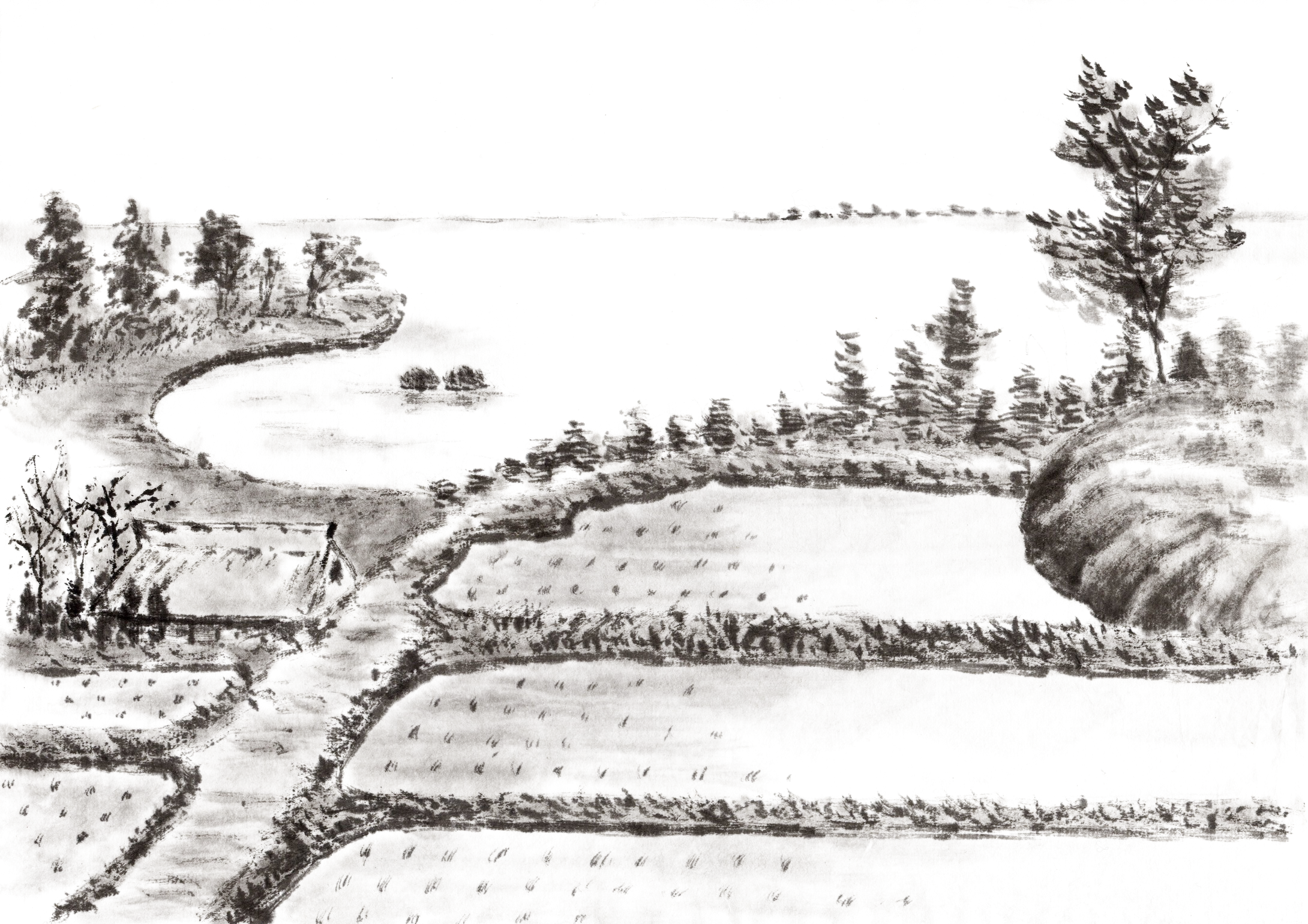 Ranch drawing ink. Paddy field rice painting