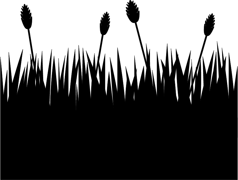 Sihouette of fields by. Cornfield drawing rye field graphic freeuse