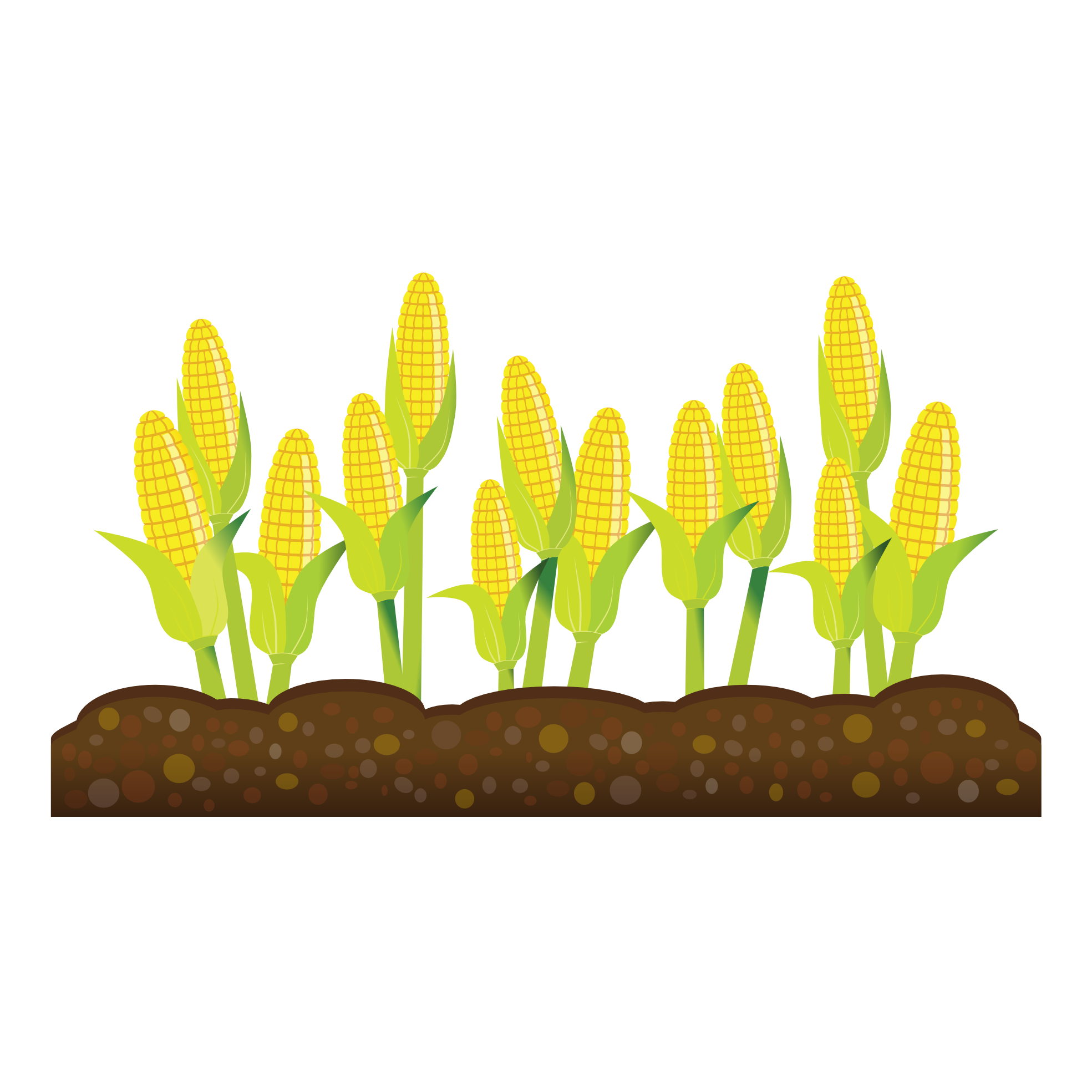 Stalk image free. Cornfield drawing wheat field svg freeuse stock