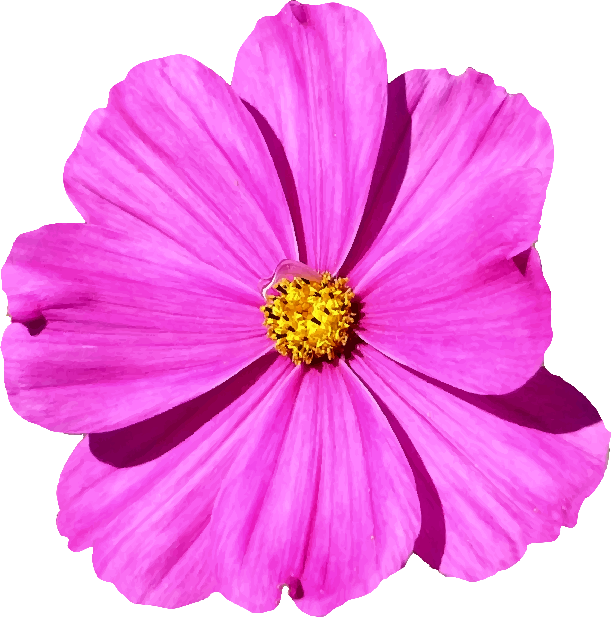 Cosmos flower png. Icons free and downloads