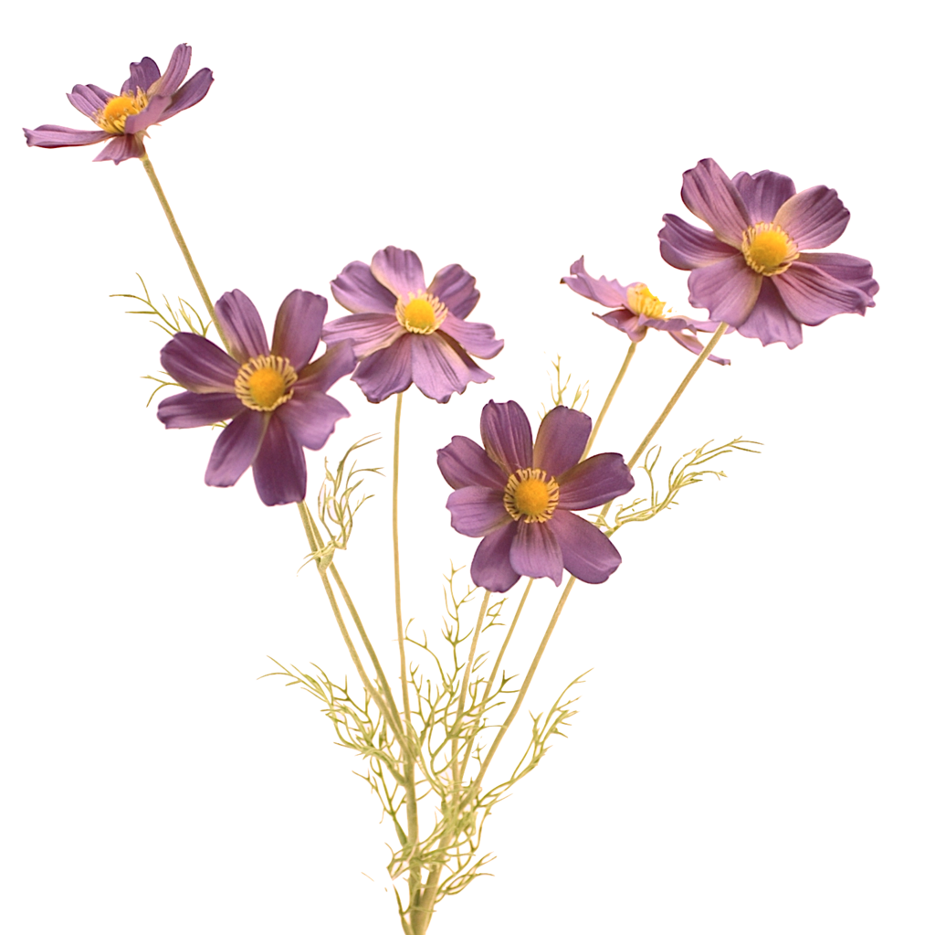 Cosmos flower png. Luxury purple blue artificial