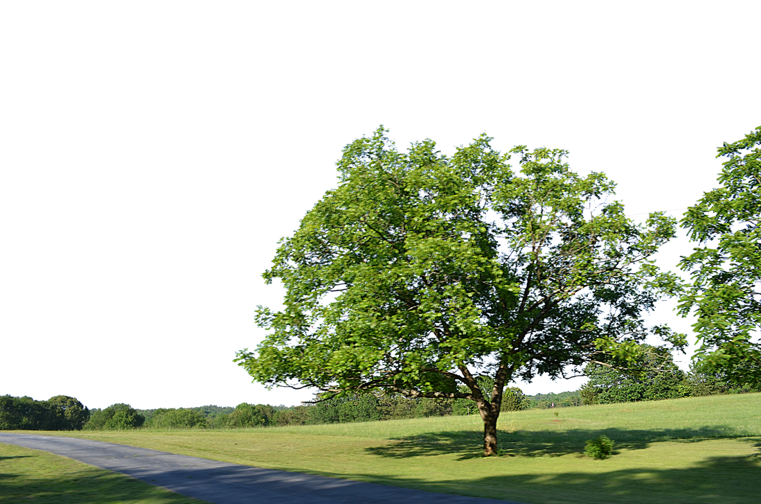 Country background png. Tree along road stock