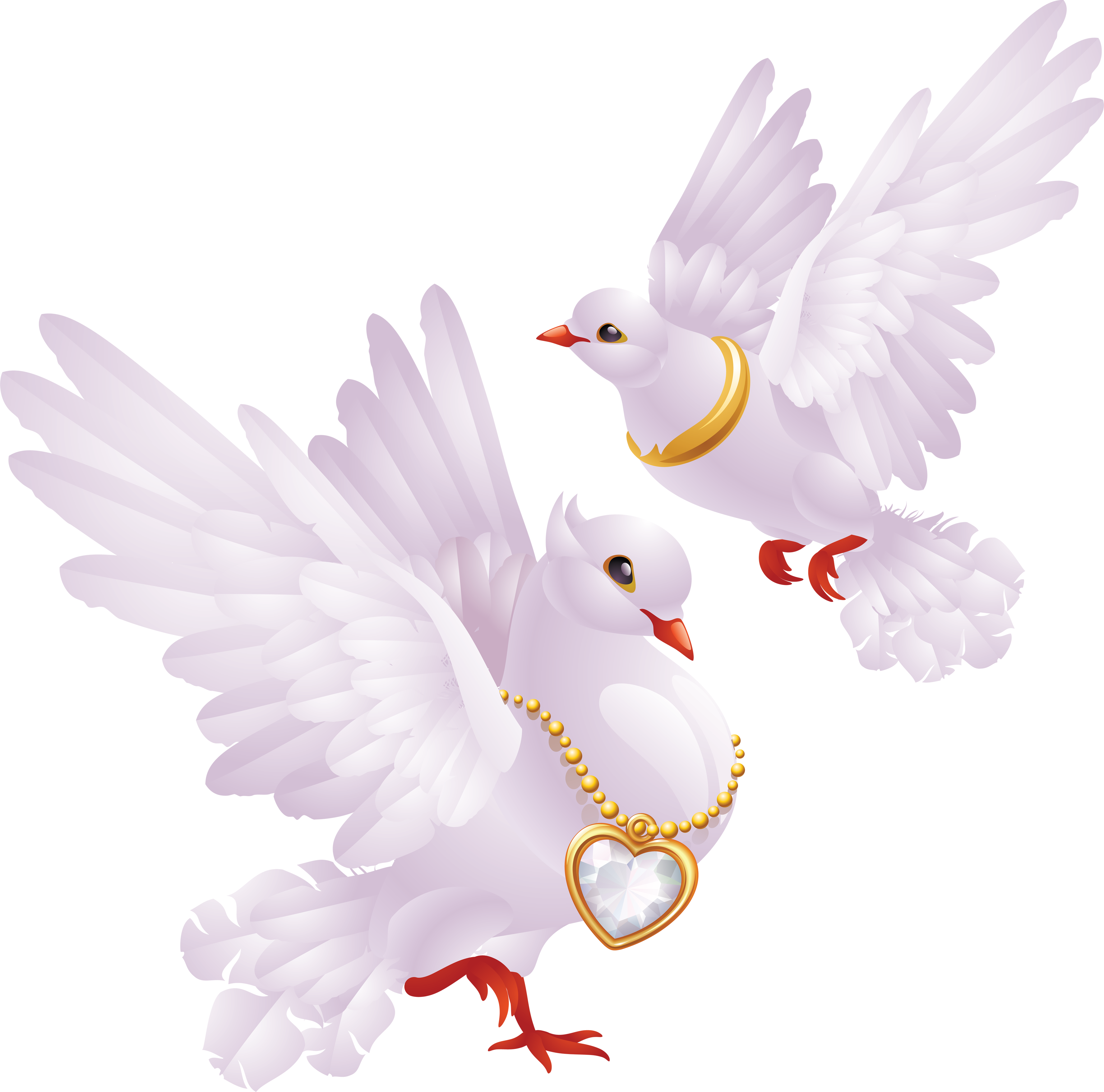 Couple doves for wedding png. Pigeon images free pictures