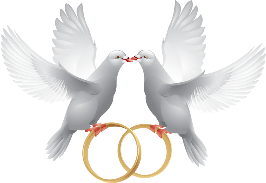 Couple doves for wedding png. Pinterest clip art