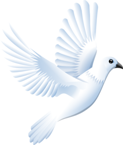 Png hd transparent images. Vector doves wedding dove freeuse library