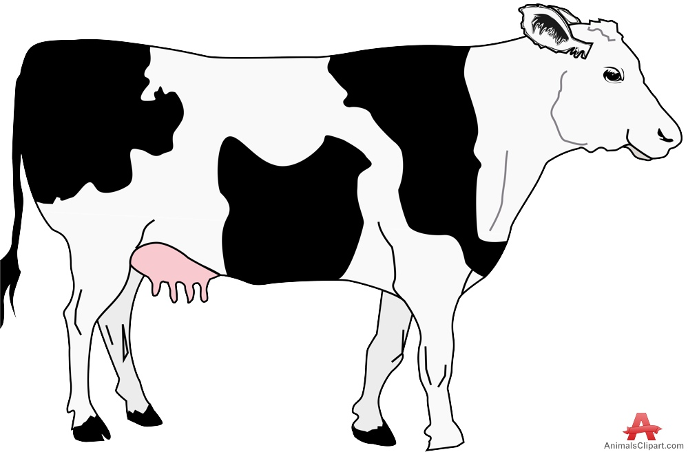 Cow clip art clear background. Clipart of a cattle
