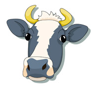 Search results for pictures. Cow clip art face image free