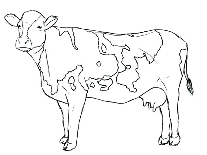 Royalty free vector illustration. Cow clip art outline graphic black and white stock