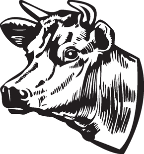 Cow clip art profile. Head drawing at getdrawings