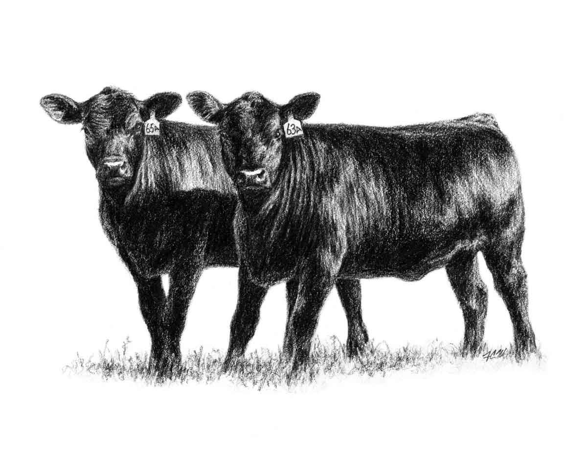Cow clip art profile. Show steer graphics heifers