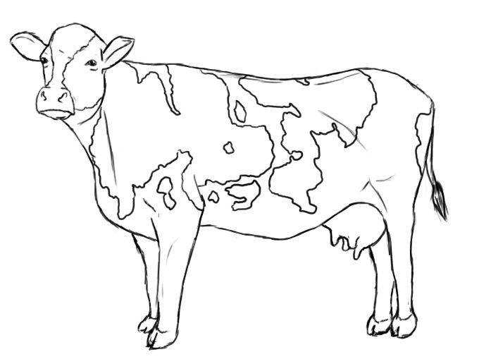 Dairy line drawings to. Cow clip art realistic vector freeuse download